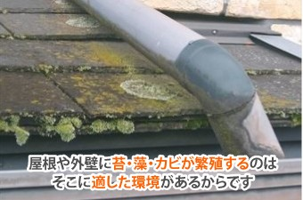 屋根や外壁に苔・藻・カビが繁殖するのはそこに適した環境があるからです