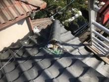 棟瓦の剥がれを発見