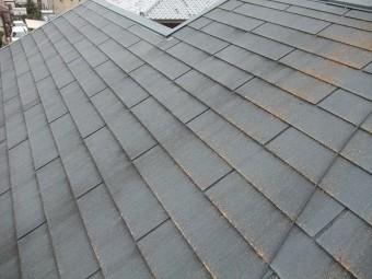 カビが発生した屋根の様子
