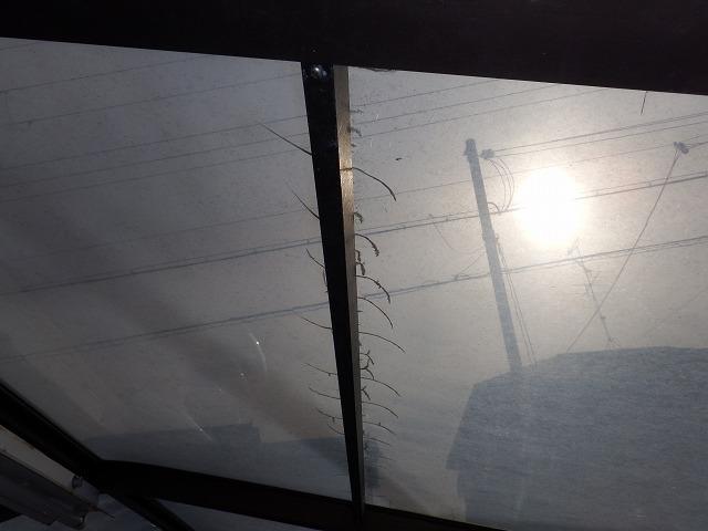 王寺町のカーポート屋根劣化状況