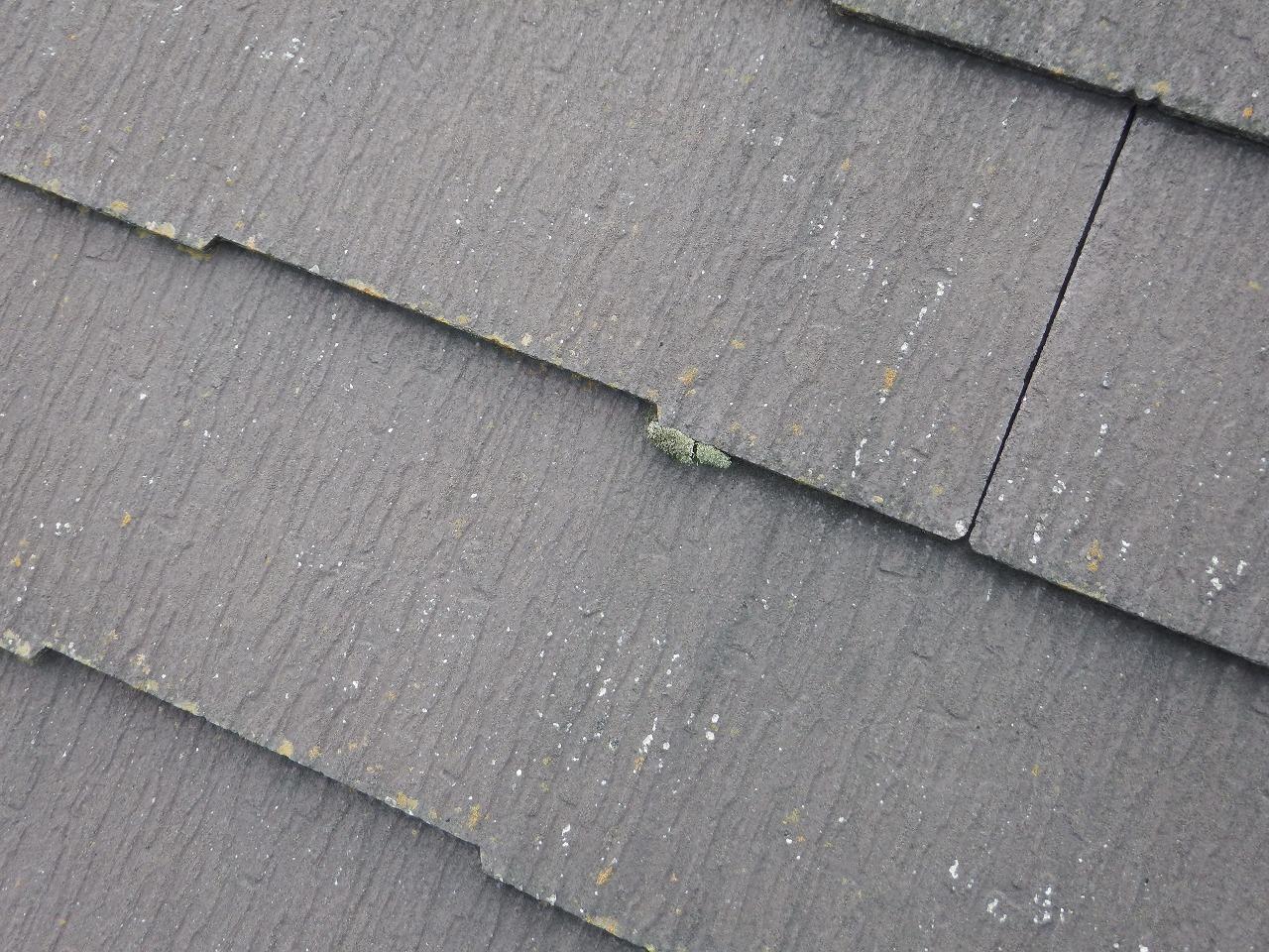 生駒市のスレート屋根、コロニアルNEOの隙間にコケ