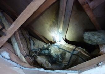 ライトで照らされた天井裏